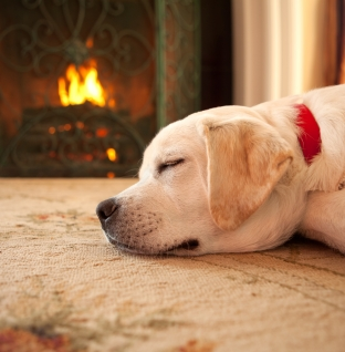 Protege a tu mascota del frío este invierno