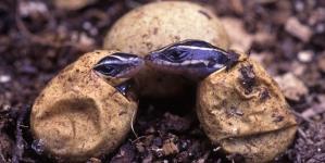 ¿Cómo es la reproducción de los reptiles?