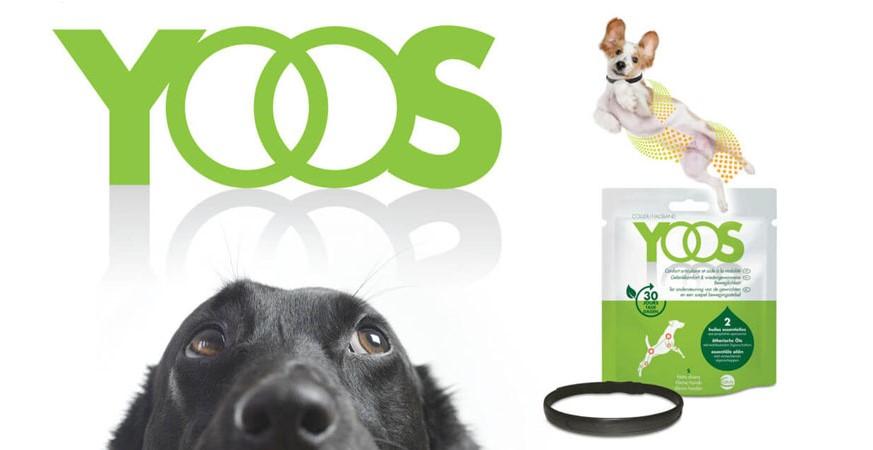 cuidados-perros-senior