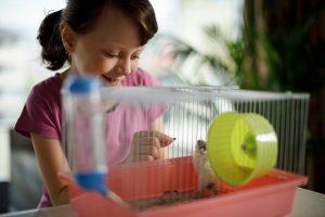 como-cuidar-un-hamster