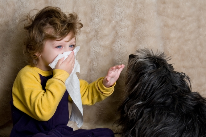 Perros que no dan alergia