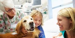 Terapia con perros ¿Cómo pueden ayudar a curar?