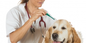 Desparasitar perros adultos ¿cada cuánto tiempo?