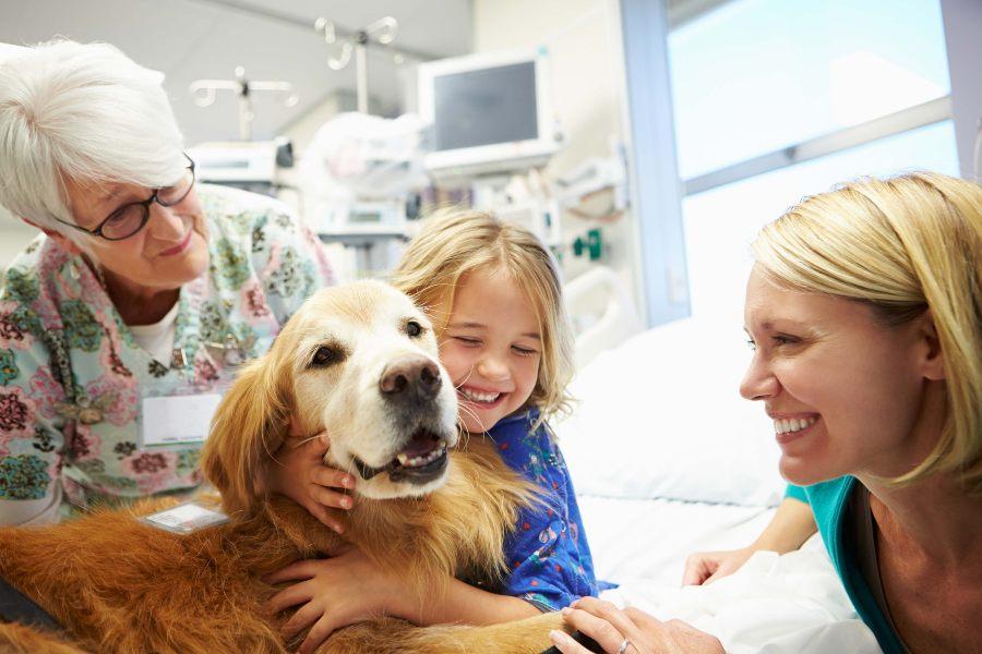 terapia-con-perros-como-pueden-ayudar-a-curar