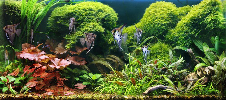 acuario-mas-grande-mundo