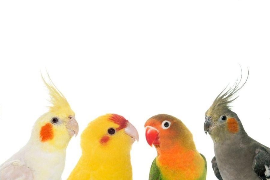 Las aves son dinosaurios