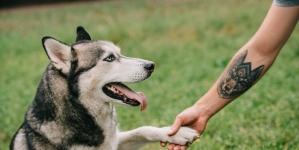 Tatuaje de animales ¿Sabes cuál es su significado?