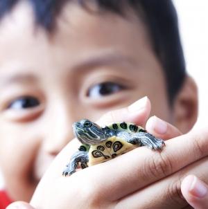 Tortuga como mascota para niños