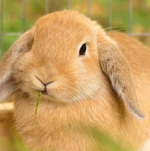 Qué vitaminas necesita mi conejo