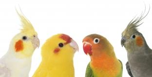 ¿Las aves son dinosaurios?