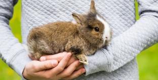 El conejo como mascota para niños