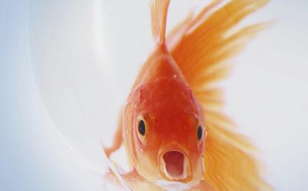 Parásitos en peces