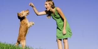 Las mejores golosinas para perros