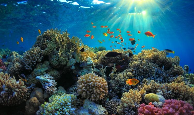 Los peces más raros del mundo