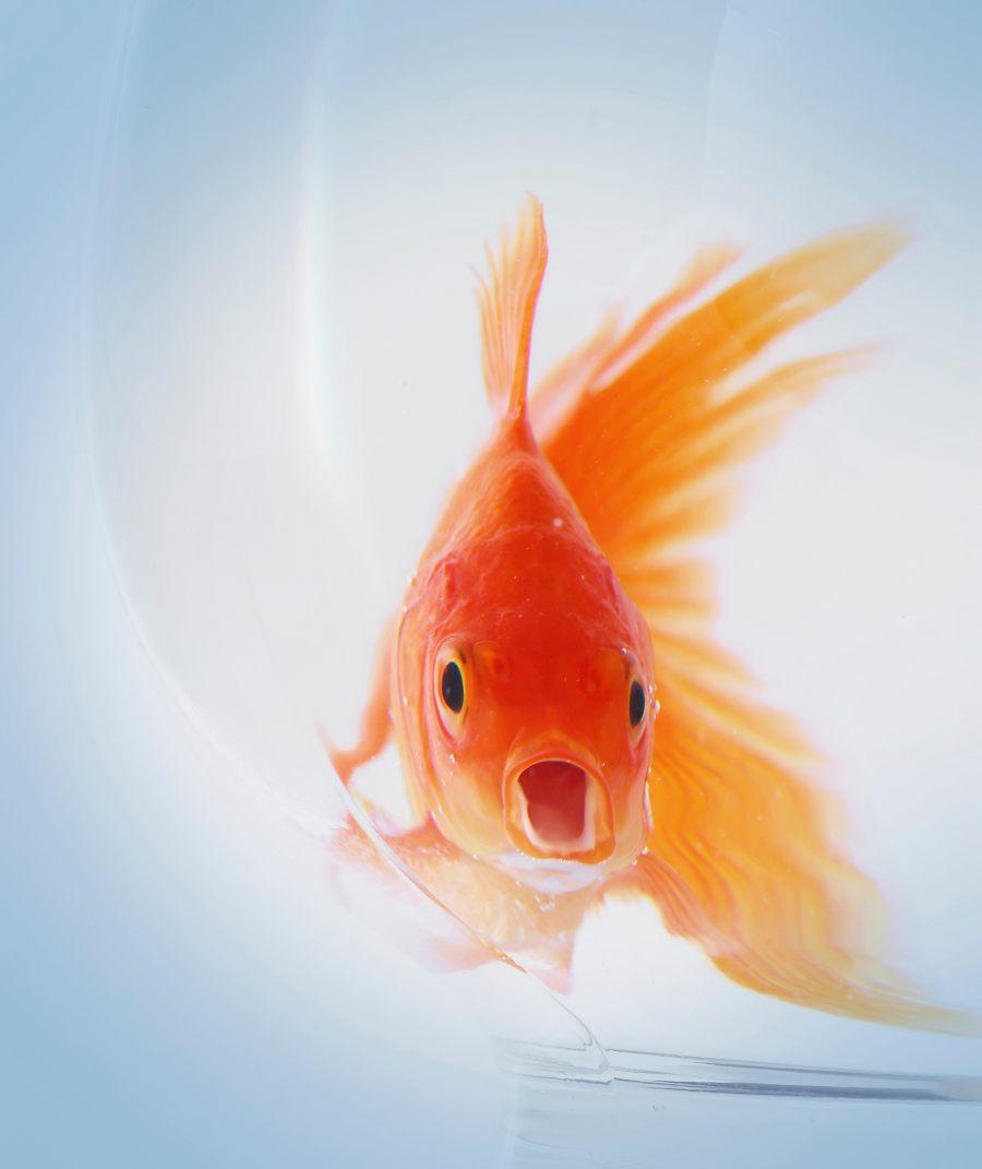 parasitos-en-peces