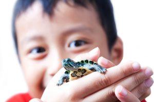 tortuga-mascota-ninhos