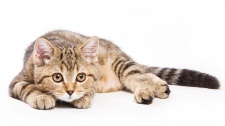 PIF: Peritonitis infecciosa felina