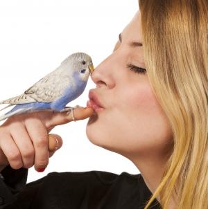 Los mejores pájaros domésticos