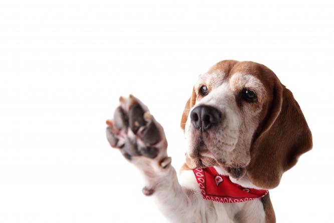 ¿Cómo cuidar las almohadillas de los perros?