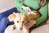 ¿Qué factores debo de tener en cuenta a la hora de adoptar un perro?