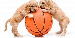 ¿Cuál es el mejor juguete para perros?
