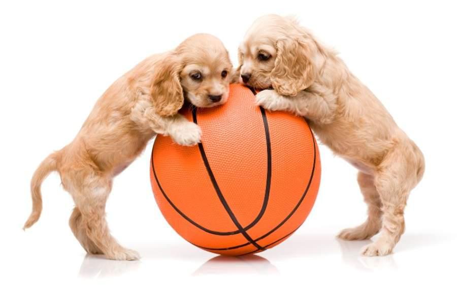 los mejores juguetes para perros