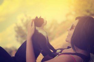 que-debo-tener-en-cuenta-adoptar-gato