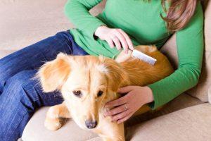 que-tener-en-cuenta-adoptar-perro