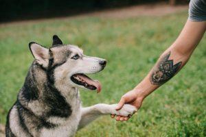 tatuajes-animales-significado