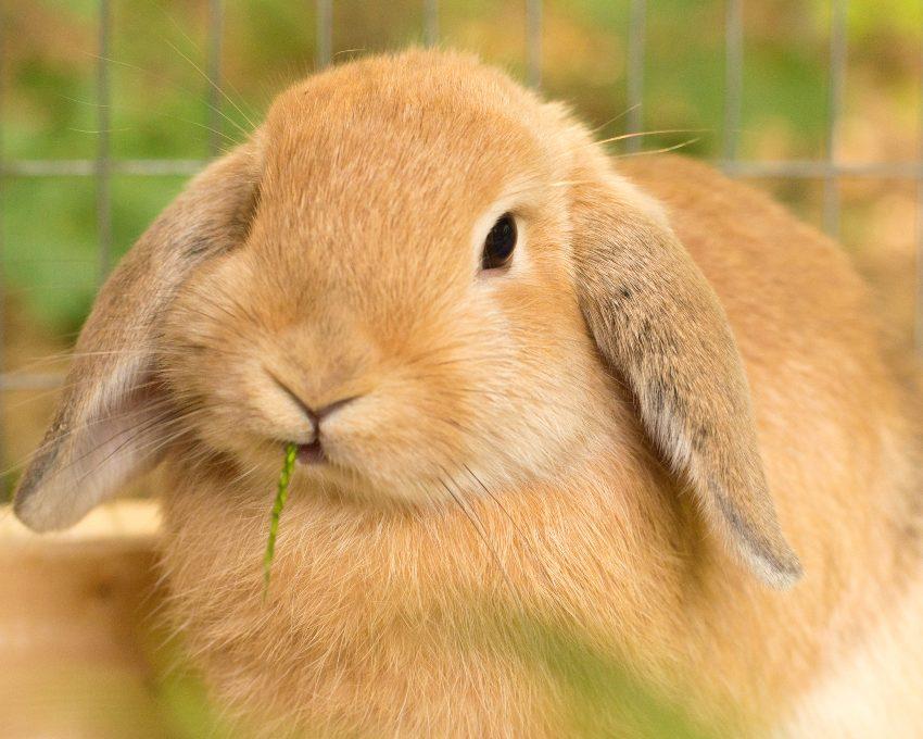 vitaminas-conejo