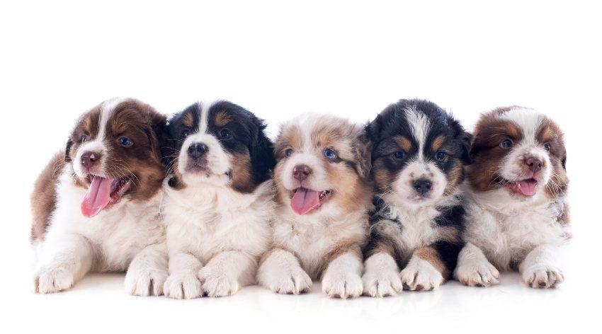 estudio-anual-mascota-perros