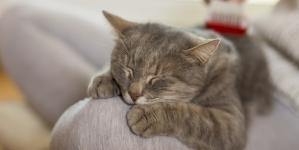 ¿Cuánto duerme un gato?