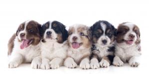 III Estudio Anual sobre Mascotas en España