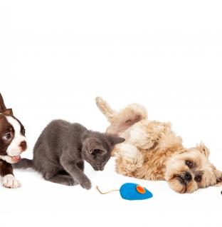Los mejores inventos para mascotas de la última década