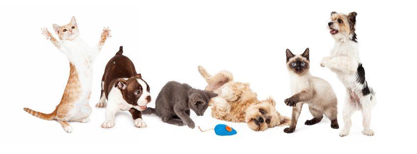 mejores-inventos-mascotas