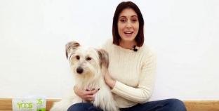 Análisis: Collar articular Yoos para perros