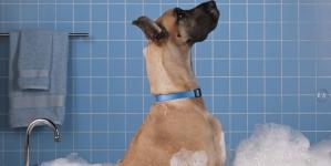 ¿A tu perro no le gusta la hora del baño? Cómo solucionarlo