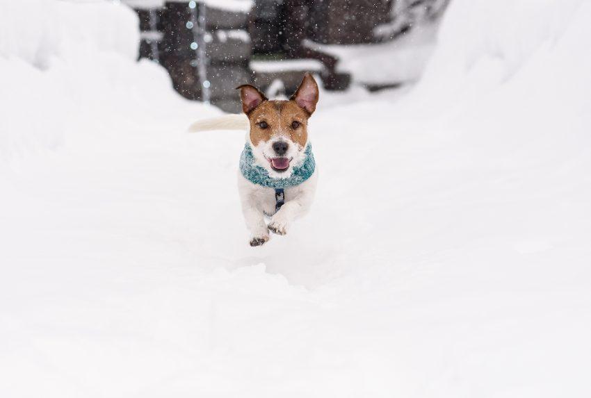 como-disfrutar-de-la-nieve-junto-perro