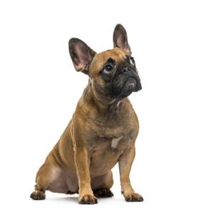 Por qué tu perro vomita espuma amarilla
