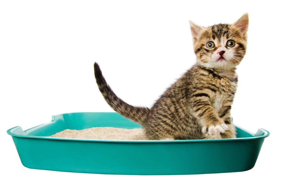 artículos imprescindibles para tu gato