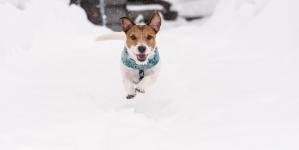 Cómo disfrutar de la nieve junto a tu perro