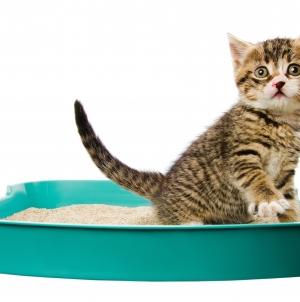7 artículos imprescindibles para tu gato