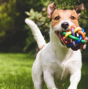 Juguetes para perros: ¿Por qué comprar juguetes específicos para ellos?