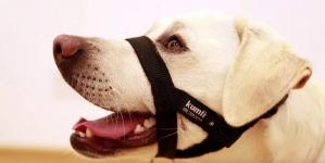 Análisis: Kumfi collares, arneses y correas de entrenamiento