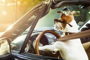 Viajar con tu perro en coche