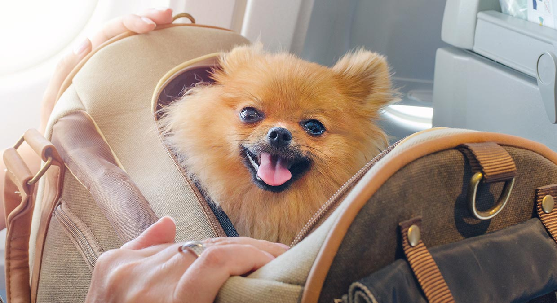 como-elegir-el-mejor-transportin-para-mi-perro