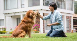 hombre adiestrando a un perro