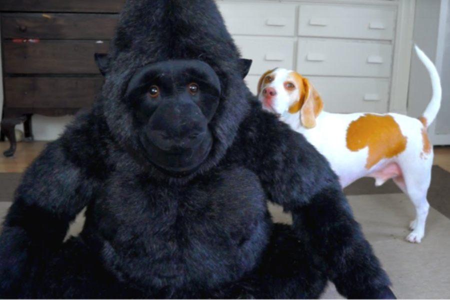 Maymo y el gorila de peluche