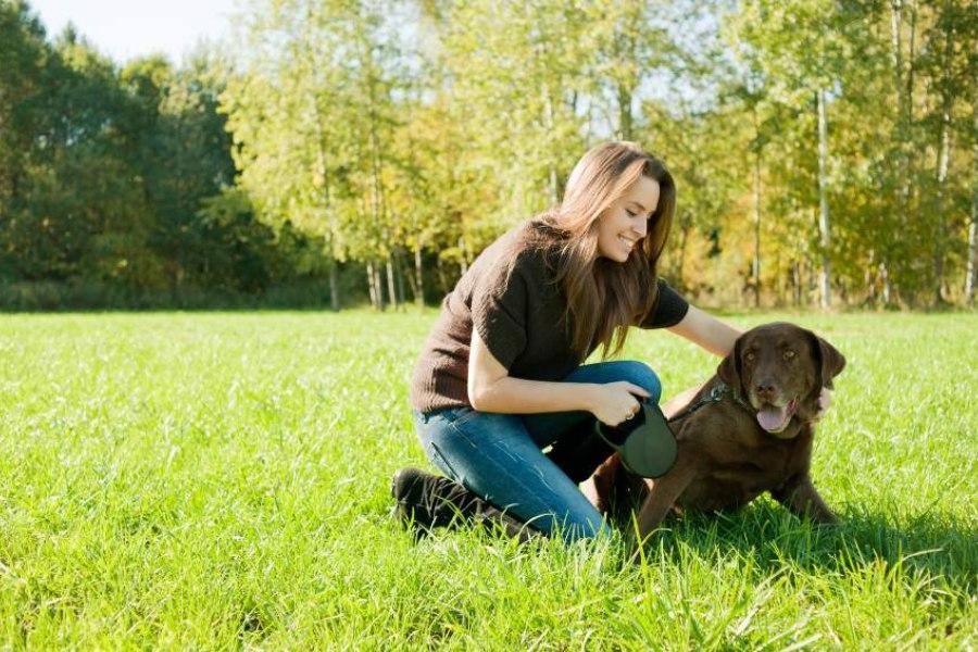 como-socializar-a-un-perro