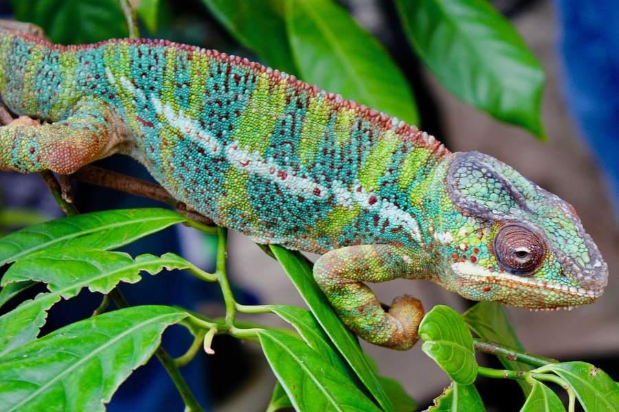 equipar el terrario para una iguana o un camaleón (1)